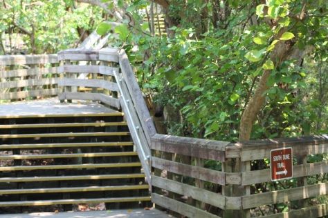 stairs at macarthur state park