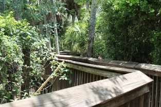 The boardwalk continues into the thicket