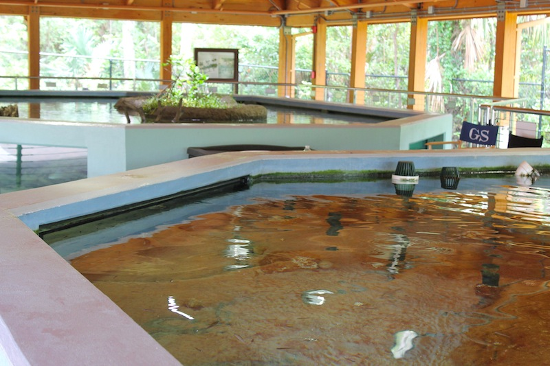 shallow tank exhibit pavilion gumbo limbo
