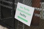 sea turtle rehabilitation gumbo limbo