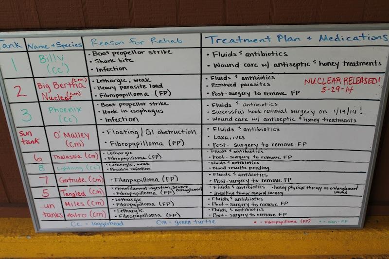 health treatment plan chart for sick injured sea turtle