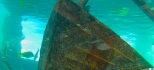 gumbo limbo shipwreck