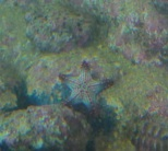 gumbo limbo coral reef sea tank