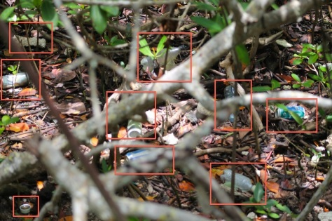mangrove trash debris litter