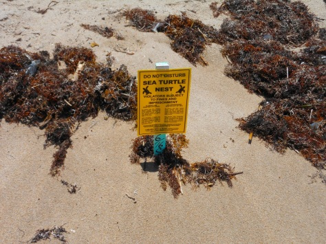 turtle nest pollution