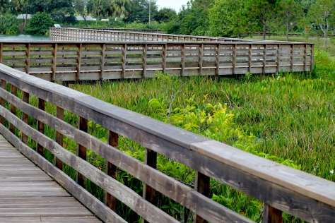 Wakodahatchee Wetlands Birdwatching Delray Beach Florida The Beach Review Travel Blog