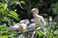 baby anhinga bird the beach review south florida travel blog