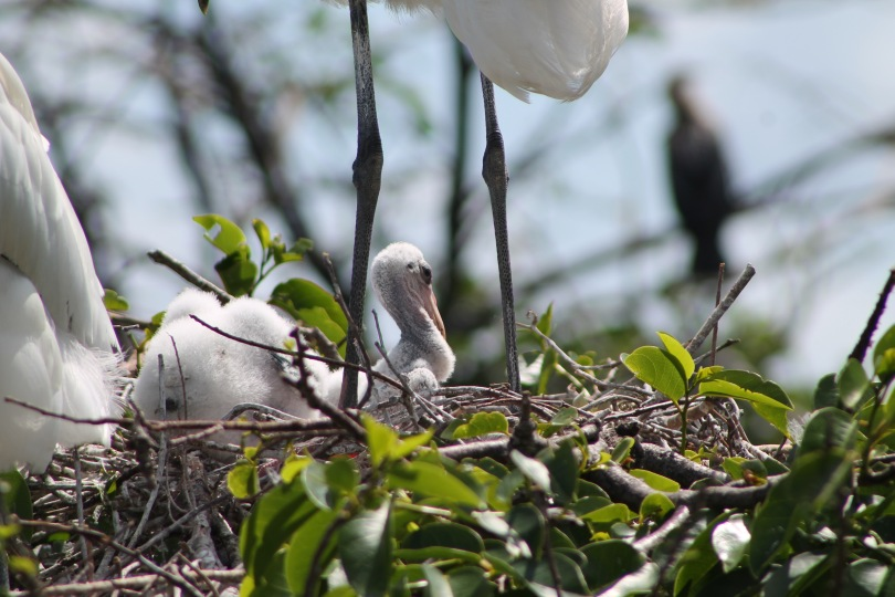 wood stork bird the beach review blog travel nature birdwatch